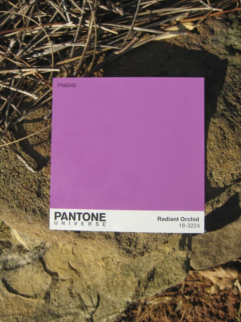 Radiant Orchid with tans