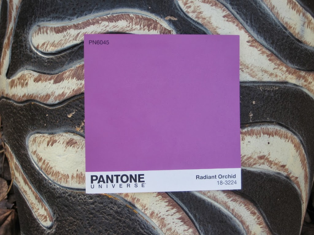 Radiant Orchid with zebra