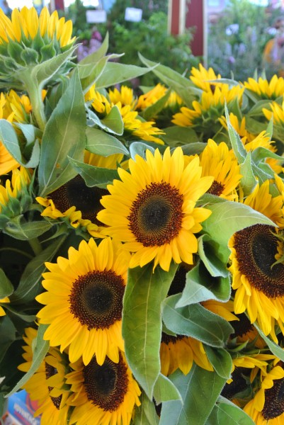sunflowers- Farmers Market with Living With Color Designs