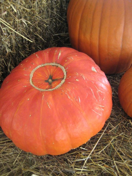 two toned orange pumpkin- Living with Color Designs