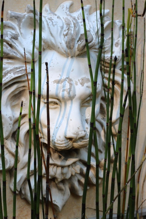 Garden Photos: Living With Color Designs - Equestrian Tail has shadow play across a fountains lion head sculpture